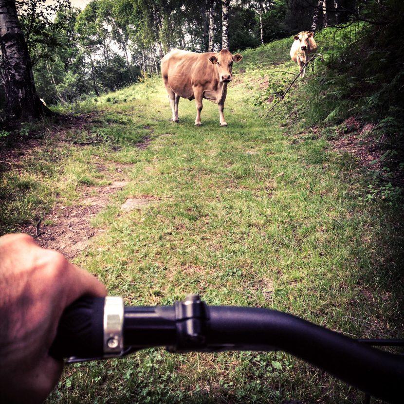 mtb-basebike-freeride-downhill-ebike